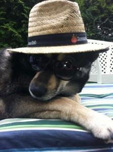 Hunde_HV_werbung
